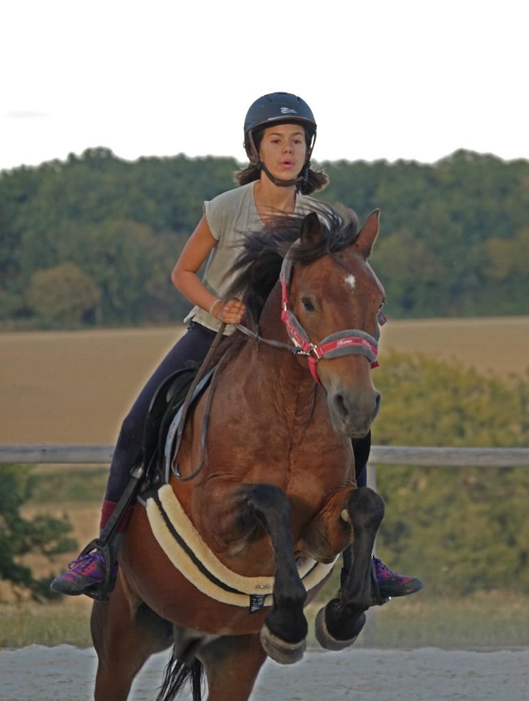 enseignement equestre