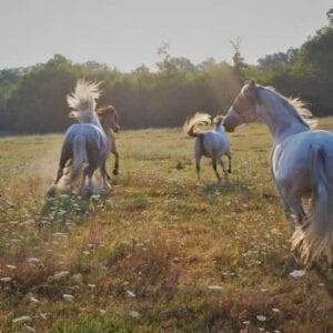 renouer avec l'équitation